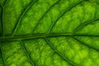 Green leaf super macro vibrant colors