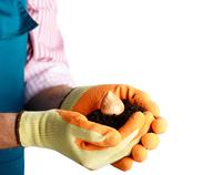 Flower bulb in farmer's hands ready for planting
