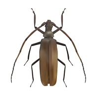 Large Brown Beetle. Realistic Vector Illustration EPS10. Large Brown Beetle. Realistic Vector Illustration