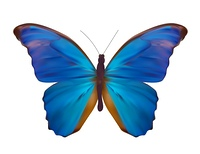 Blue Butterfly Isolated on White Realistic Vector Illustration EPS10. Blue Butterfly Isolated on White Realistic Vector Illustration