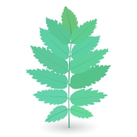 Colorful naturalistic green leaves on branch. Vector Illustration. EPS10. Colorful naturalistic green leaves on branch. Vector Illustratio