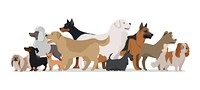 Group of Different Breeds Dogs.. Group of different breeds dogs stand on white background. Dogs banner with space for text. Vector illustration in flat style. Cartoon dog character, pet animal