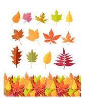 Set of Tree Leaf Icons. Autumn Leaves Isolated. Set of tree leaf icons. Autumn leaves of different colors. Maple, oak, birch, sakura, willow, poplar vector leaves illustration. Fall concept. Leaf isolated, falling autumn leaves, plant background