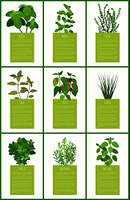 Natural fragrant herbal condiments posters set. Tasty spices used in culinary on banners with sample text. Flavored herbs vector illustrations.. Natural Fragrant Herbal Condiments on Posters Set