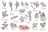 Set drawings of herbs used in cooking for design menus, recipes and packages product. Vector Illustration.. Set drawings of herbs used in cooking for design menus, recipes and packages product