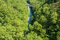 美瑛白金町の新緑の森と渓流