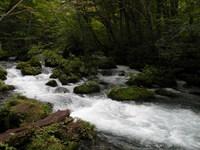 奥入瀬渓流の風景