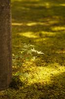 木漏れ陽の一葉