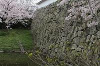 福岡城址のさくら