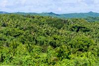 マルキョク州のジャングル