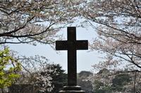 桜と十字架