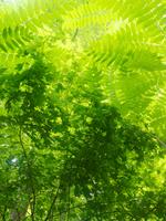 緑のガーデン