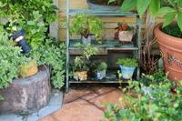 可愛い癒しの植物たち