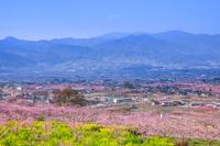 桃の花咲く甲府盆地と山並み