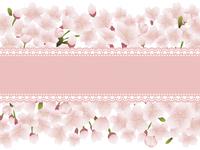桜の花とレースのメッセージカード