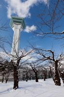 五稜郭公園の桜と五稜郭タワー(冬)