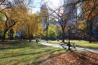 秋の小道 セントラルパーク