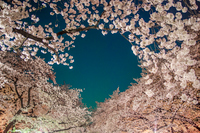 桜のブラックホール