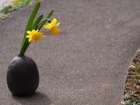 和の花器に挿した黄色い水仙