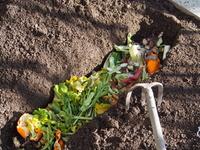 家庭菜園・野菜くずで堆肥作り
