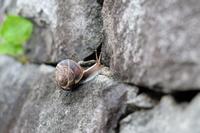 カタツムリの岩登り
