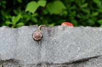カタツムリの岩登り・ゴールシーン