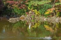 秋の池と鳥