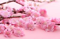 桃の花 桃の節句 雛祭り