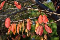 色づいた葉っぱ