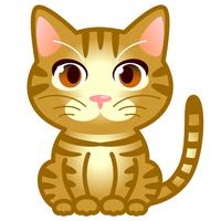 猫 茶トラ