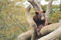 熊は見ている
