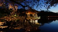 浮御堂の夜桜