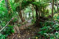 山道 森林