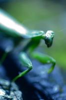緑の狩人 Ⅱ
