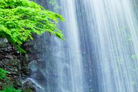 新緑の木立と水しぶき