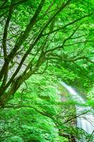 新緑の大仙の滝