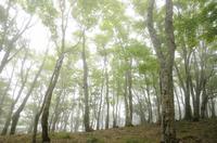 霧の新緑 丹沢山地鍋割山