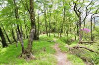 新緑の丹沢 大室山付近の登山道