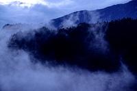 霧のたちこめる森