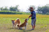 柴犬と男の子