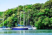 春の小網代湾 ヨット