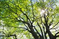 西丹沢檜洞丸の新緑