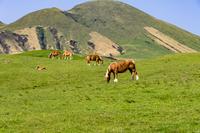 阿蘇山麓の牧場