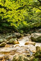 通仙峡の渓流