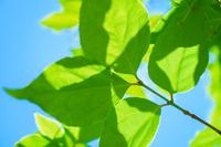 《eco》新緑のイメージ