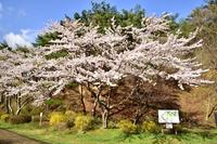 岳温泉 鏡ヶ池公園
