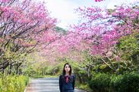 満開の桜と女学生