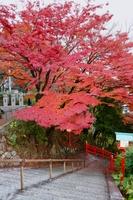 織姫山の紅葉狩り