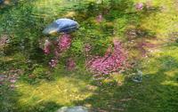 春の小川の水面に反射する花と緑
