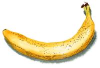 シュガースポットの出たバナナ1本